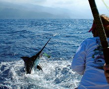 Sport fishing ( Big Game Fishing)