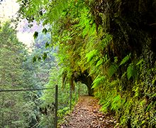 PR16 - Levada Fajã do Rodrigues