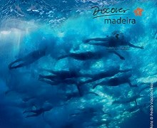 Madeira Island International Swim Marathon