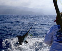 Madeira wins world title in big game fishing