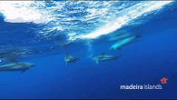 Whale and Dolphin watching in the Madeira Islands